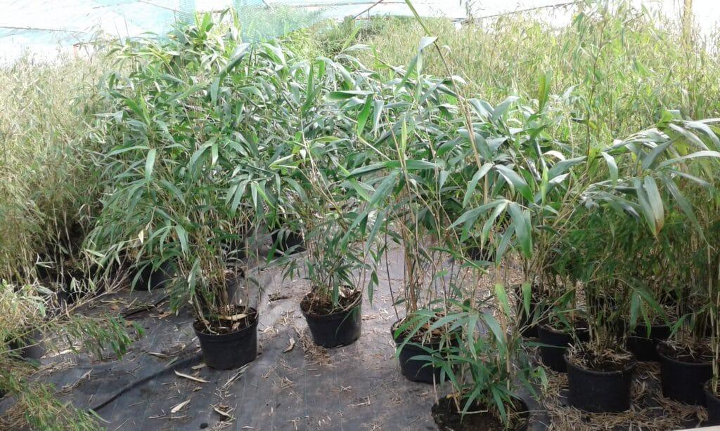 Prisliste Bambus Udsalg